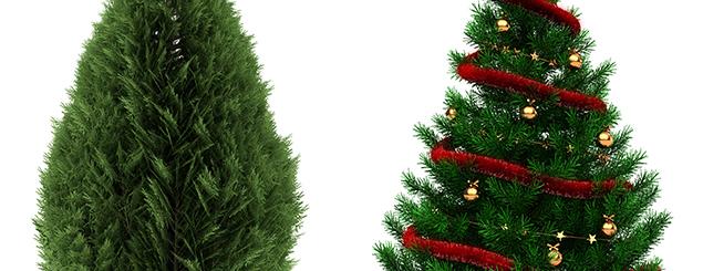 netejar arbres de nadal