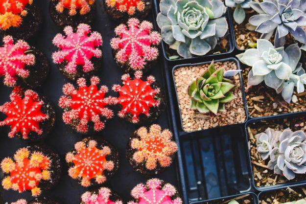 plantas para el otoño